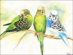 Original Aquarell Bild Wellensittiche Vogel von LovelyAquarelle - My list of the most beautiful animals Watercolor Bird, Watercolor Animals, Bird Drawings, Cute Drawings, Bird Artwork, Animal Sketches, Bird Illustration, Wildlife Art, Beautiful Birds