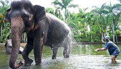 Elephant Safari Park Lodge ( Bali, Indonesia ) #Jetsetter , #JSElephant The Jetsetter rate also includes one hands-on experience, like an elephant bath.