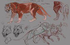 Jonathan Kuo - Tigers
