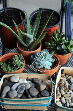 succulent terrarium how to