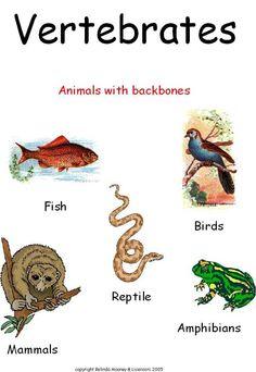 vertebrates more 2 vertebrates vertebrates animals 6 vertebrates ...