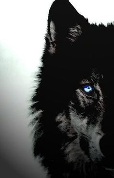Wolf art, blue eyes