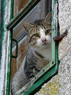"""""""If homeless cats could talk, they would probably say, give me shelter, food, companionship, and love, and I'll be yours for life."""" --Susan Easterly"""