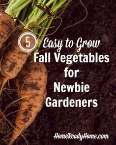 5 Easy to Grow Fall Vegetables for Newbie Gardeners