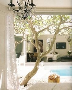 Love everything - the pool, frangipani and indoor/outdoor living