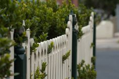 Fence and Hedge by coofdy, via Flickr