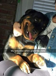 Funny Animal Pictures Of The Day - 26 Pics | Follow @gwylio0148 or visit http://gwyl.io/ for more diy/kids/pets videos This Board Will Show Funny Dogs