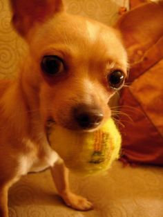 Play with me!!            Looks like my bella         Omg yes she does.
