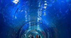 Aquarium In Oceanografic Park, Valencia, Spain (by ©Rudi Sebastian / plainpicture)