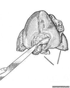 Step 4: Slice Neck Cavity