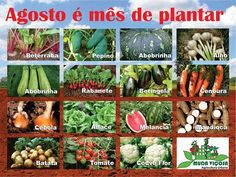 Agosto é mês de plantar: Beterraba, Pepino, Abobrinha, Alho, Rabanete, Beringela, Cenoura, Cebola, Alface, Melancia, Mandioca, Batata, Tomate, Couve flor