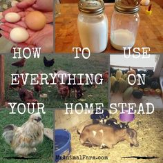 When you homestead, sometimes you end up with extra things. Learn how to use everything on your homestead with these 6 ideas.