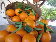 Beneficios del consumo de naranjas para la salud http://saludybienestarblog.com/2017/07/07/beneficios-del-consumo-naranjas-la-salud/?fb_action_ids=455131084846739&fb_action_types=news.publishes