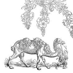 Schwarz Wollkraut. Leonhart Fuchs: New Kreuterbuch, 1543. Tafel CCCCLXXXVII. UB Erfurt, Dep. Erf. 13 – Nb. 2° 1301e. | Kamel. Gessner, Conrad & Conrad Forer: Thierbuch, 1583. UB Erfurt, Dep. Erf. 5 – Nz. 2° 1101.