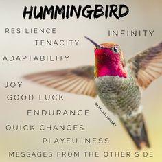 Get Well Quotes, Spirit Animal, Hummingbird, Joy, Magick, Beauty, Glee, Hummingbirds, Witchcraft