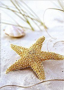 * Sea stars in our eyes~~   ...