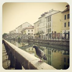 Summer in Milano, Navigli. #Milano #mytravelblog photo by Stella Marega