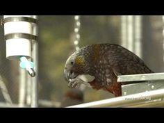 Kaka Wainui Hut Abel Tasman National Park - YouTube
