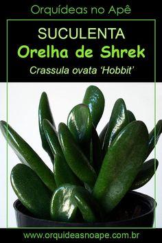 Crassula Ovata, Cactus Y Suculentas, Succulents Garden, Garden Design, Hobbit, Vegetables, Green, Plants, Shrek