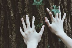 Her pale hands lovingly stroked the tree that had served as such a comfort in past years.