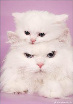 Kitten hat.