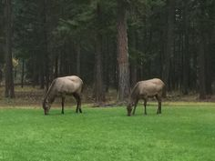 The herd just came out of nowhere.