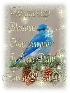 Blessed Wednesday