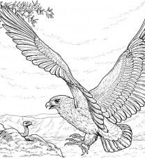 21 best Eagle Coloring Pages images on Pinterest   Coloring books ...