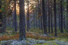 Natural Features of Lauhanvuori National Park Park Photos, National Parks, Nature, Plants, Naturaleza, Plant, Nature Illustration, Off Grid, Planets
