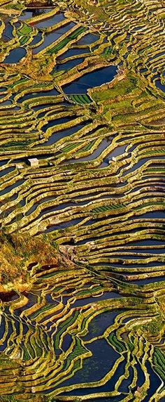 Picture of terraced rice fields in Yuanyang, Yunnan Province, China, by Thierry Bornier