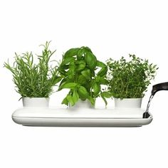 Love this for small apartment kitchens - rosemary, basil and thyme