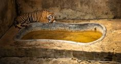 Photos show that zoos are more like animal prisons than a conservation effort