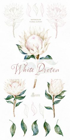 Watercolor Flowers and Frame, botanical art, king protea, blossom,… - Modern Protea Art, Flor Protea, Protea Flower, Botanical Illustration, Botanical Art, Illustration Art, Botanical Flowers, King Protea, Bridal Invitations