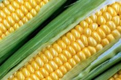 Corn on the Cob Cooking Tips and How to Pick Out Corn at the Grocery Store Cooking Sweet Corn, Healthy Corn, Gmo Facts, Veggie Tales, Make Good Choices, Natural Supplements, Nutrition Guide, Cob, Creative Food