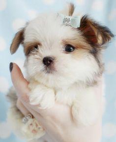♥ Adorable Cute Little Puppy ♥