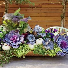 Bring a seasonal splash of color to your entryway by mixing and matching eye-popping blooms with rustic grasses and foliage in your fall container gardens. Fall Window Boxes, Ornamental Cabbage, Fall Containers, Succulent Containers, Fall Container Gardening, Fountain Grass, Pot Jardin, Fall Planters, Garden Planters