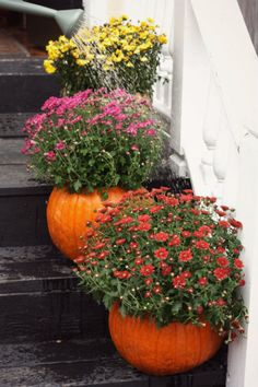 Don't turn your hallowed-out pumpkins into jack-o'-lanterns just yet! Instead, plant fall mums inside for the perfect planters to lead guests up your steps.