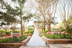 Garden styled bridal portraits at Clark Gardens in Weatherford, TX. Photo Credit: Swan Photography / Planner: Wisteria Lane Weddings / Floral: From A to Z Design / Venue: Clark Gardens / Dress: Bow and Arrow Bridal Clark Gardens, Weatherford Tx, Garden Dress, Wisteria, Bridal Portraits, Garden Styles, Photo Credit, Floral Wedding, Swan