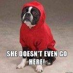 30 Dogs Who Are Actually Mean Girls