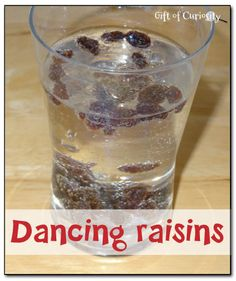 Dancing raisins experiment - you'll be amazed at how much you can get your raisins to dance in a glass of carbonated liquid! #preschool #handsonscience #statesofmatter || Gift of Curiosity