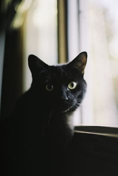 adorable, adorbs, animal, animals, aw, beautiful, black cat, cat, cats, cute, cutie, dark, eyes, kitten, kitty, lovely, pet, photography, pretty, whiskers