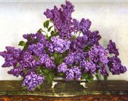 CONSTANCE SPRY  Florist, Author + Social Reformer (1886-1960)  Massed Lilacs, 1951  © Constance Spry Ltd