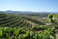 Bodegas Pinord, Priorat, DO Priorat, viñedos