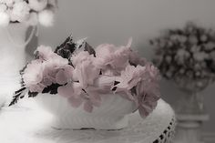 A Soft Serving Of Begonias by Sandra Foster