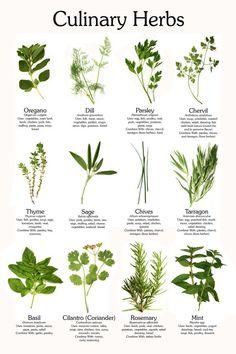 Herbal Medicines PDF Format Files Herb 29 Books Culinary Herbs Medicinal G.Herbs Herbal Medicines PDF Format Files Herb 29 Books Culinary Herbs Medicinal G.