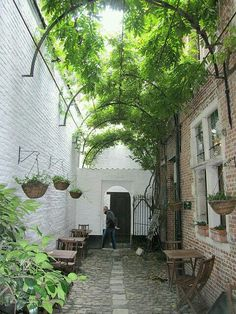 Covered walk way. Back garden. Alley. Green. Climbing plants.
