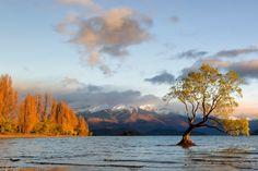 Lonely Tree on Lake Wanaka by David Buhler on 500px