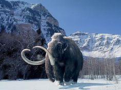 Los mamuts podrían regresar a la vida gracias a la ciencia
