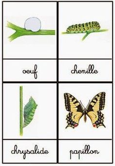 Crapouillotage: Cartes de Nomenclatures : Le Cycle de vie du Papillon Crapouillotage: Nomenclature Maps: The Life Cycle of the Butterfly Science Montessori, Preschool Curriculum, Preschool Kindergarten, Craft Projects For Kids, Science Projects, Science For Kids, Science And Nature, Science Ideas, Earth Science