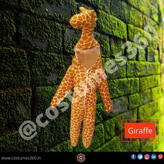 Tall Boy wearing a costume of giraffe would look stunning.   The giraffe is an African artiodactyl mammal, the tallest living terrestrial animal and the largest ruminant. It is traditionally considered to be one species, Giraffa camelopardalis, with nine subspecies. Banana Fancy Dress, Fancy Dress For Boy, Ant Costume, Costumes, Giraffe Costume, Banana Uses, Dresses Near Me, Fancy Dress Online